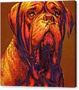 Dogue De Bordeaux Canvas Print