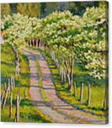 Dogwood Allee Canvas Print