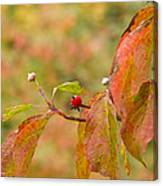 Dogwood Berrie Canvas Print