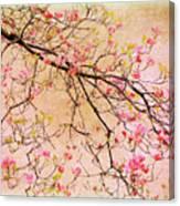 Dogwood  Canvas Canvas Print
