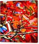Dogwood In Autumn Canvas Print