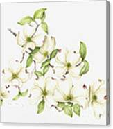 Dogwood In Spring Canvas Print