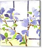 Dogwood In The Window Canvas Print