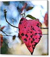 Dogwood Leaf - Red Leaf Falling With Watching Buds Canvas Print