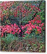 Dogwood Leaves In The Fall Canvas Print