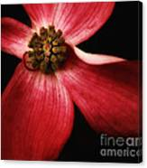 Dogwood Macro Canvas Print