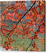 Dogwood Tree Canvas Print