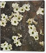 Dogwood Winter Canvas Print