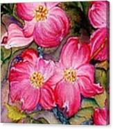 Dogwoods In Pink Canvas Print