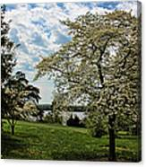 Dogwoods In Summer Canvas Print