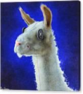 Dolly Llama... Canvas Print