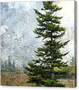 Dolly Sods Pine Canvas Print