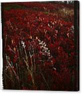 Dolly Sods Canvas Print