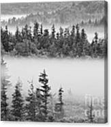 Dolly Sods Wilderness D300_10363_bw Canvas Print