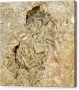 Dolomite Crystals Canvas Print