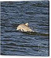 Dolphin At Sea Canvas Print