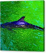 Dolphin In The Shallows Canvas Print