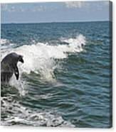 Dolphin In Waves Canvas Print