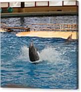 Dolphin Show - National Aquarium In Baltimore Md - 1212102 Canvas Print