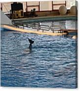 Dolphin Show - National Aquarium In Baltimore Md - 1212142 Canvas Print