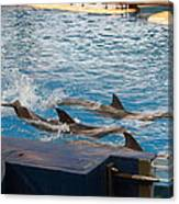 Dolphin Show - National Aquarium In Baltimore Md - 1212187 Canvas Print