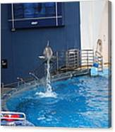 Dolphin Show - National Aquarium In Baltimore Md - 1212200 Canvas Print