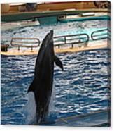 Dolphin Show - National Aquarium In Baltimore Md - 1212209 Canvas Print