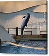 Dolphin Show - National Aquarium In Baltimore Md - 121255 Canvas Print