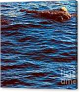 Dolphin Visitors Canvas Print