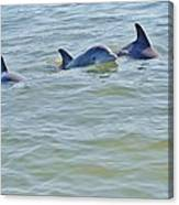 Dolphins 2 Canvas Print