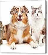 Domestic Pet Composite Canvas Print