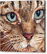 Domestic Tabby Cat Canvas Print