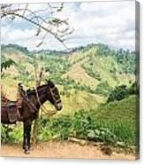 Donkey And Hills Canvas Print