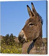 Donkey In Greece Canvas Print