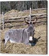 Donkey In Hay Canvas Print