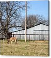 Donkey Lebanon In Oklahoma Canvas Print