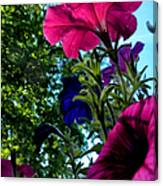 Donna's Blooming Petunias Canvas Print