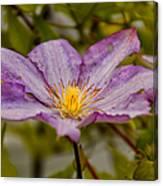 Donna's Purple Flower Canvas Print