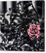 Donna's Rose Canvas Print