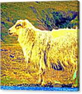 Dont Be Sheep, You Said, But I Just Can't Help It Canvas Print