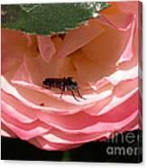 Don't Bug Me Canvas Print