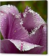 Dont Call Me A Monster Just Because I Have Teeth Purple Tulip Canvas Print