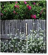 Don't Fence Me In - Wild Roses - Old Fence Canvas Print