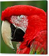 Dont You Dare To Stare Macaw Canvas Print