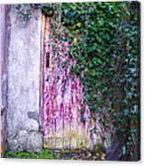 Door Covered In Ivy Canvas Print