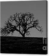 Dormant Tree On Hill Canvas Print