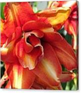 Double Asiatic Lily Named Cocktail Twins Canvas Print