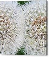 Double Dandelion Wishes Canvas Print