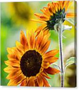 Double Dose Of Sunshine Canvas Print