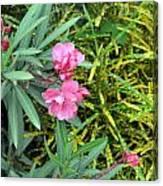 Double Oleander Canvas Print